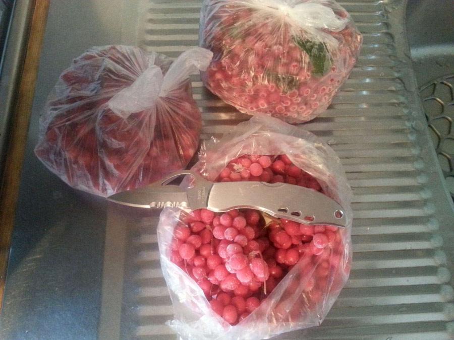 Хранение ягод лимонника в холодильнике