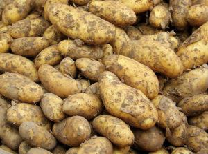 Кому нельзя есть молодой картофель